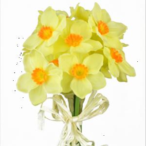 Daffodil Bundle