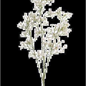 Gypsophilia White