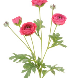 Ranunculus Spray Red