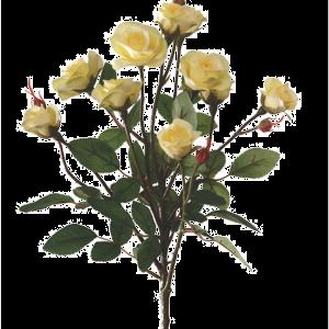 Rose Bush Spray Yellow