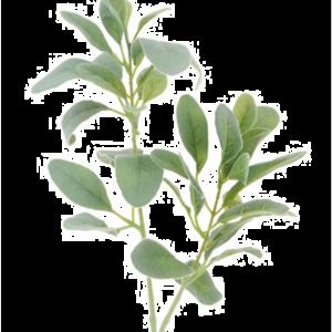 Lambs Ear Spray Grey Green
