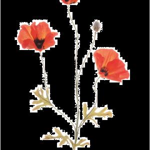 Poppy Field Stem Orange