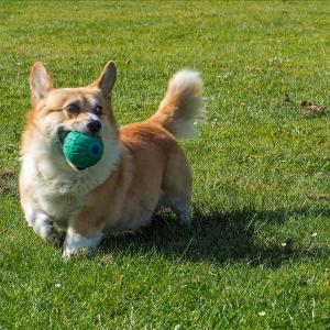 Rubber Squeak Ball 9cm