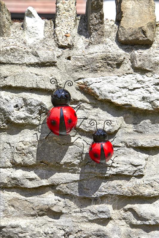 Large Ladybird Hanger On