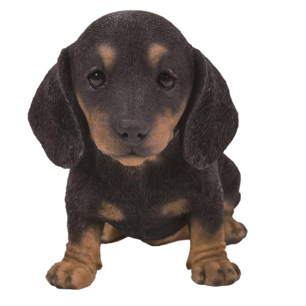 Pet Pal Dachshund Puppy