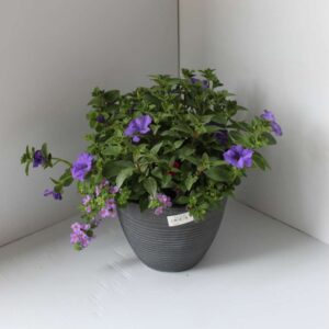 Core Planter
