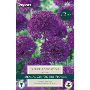 Allium Purple Sensation 5 Bulbs