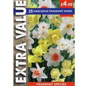 Narcissus Species Fragrant Mix 25 Bulbs