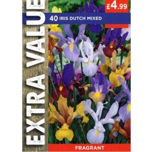 Iris Dutch Mix 40 Bulbs