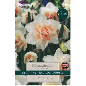 Narcissus Delnashaugh 5 Bulbs