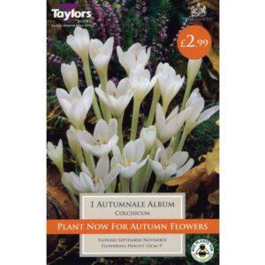Colchicum Autumnale Album 1 Bulb