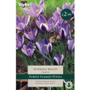 Crocus Spring Beauty 10 Bulbs