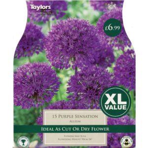 Allium Purple Sensation 15 Bulbs
