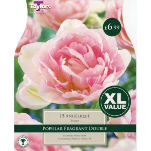 Tulip Angelique 15 Bulbs