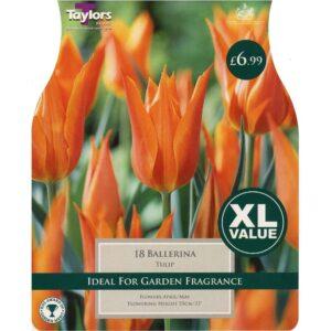 Tulip Ballerina 18 Bulbs