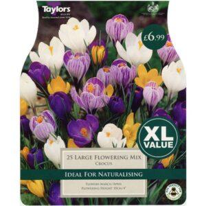 Crocus Large Flowering Mix 25 Bulbs