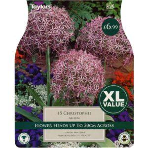Allium Christophii 15 Bulbs