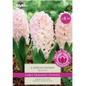 Hyacinth Apricot Passion 6 Bulbs