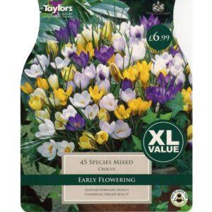 Crocus Species Mix 45 Bulbs