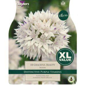 Allium Graceful Beauty 18 Bulbs