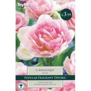 Tulip Angelique 6 Bulbs