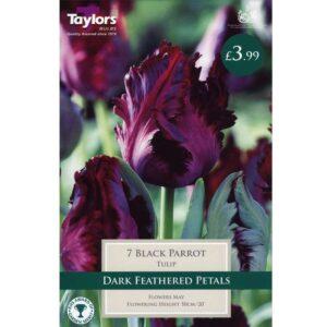 Tulip Black Parrot 7 Bulbs