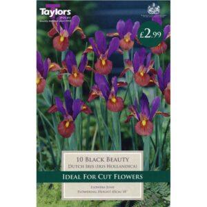Iris Black Beauty 10 Bulbs
