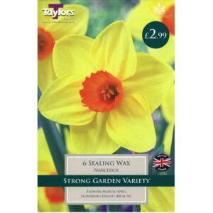 Narcissus Sealing Wax 6 Bulbs