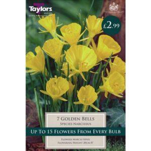 Narcissus Golden Bells 7 Bulbs