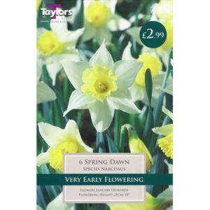 Narcissus Spring Dawn 6 Bulbs