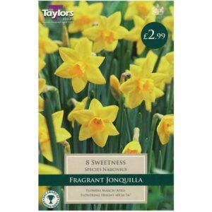 Narcissus Sweetness 8 Bulbs