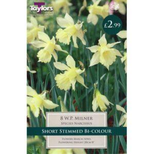 Narcissus W.P.Milner 8 Bulbs