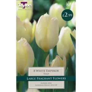 Tulip White Emperor 8 Bulbs