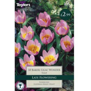 Tulip Bakeri Lilac Wonder 10 Bulbs