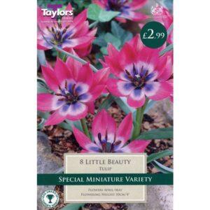 Tulip Little Beauty 8 Bulbs