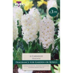 Hyacinth Carnegie 6 Bulbs