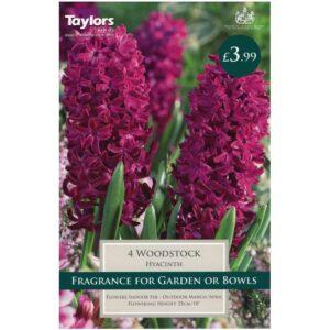 Hyacinth Woodstock 4 Bulbs