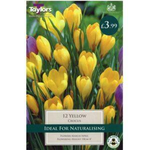 Crocus Yellow 12 Bulbs