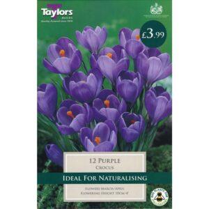 Crocus Purple 12 Bulbs