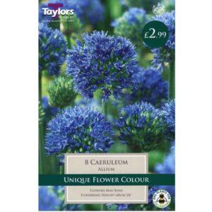 Allium Caeruleum 8 Bulbs
