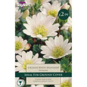 Anemone Blanda White 6 Bulbs