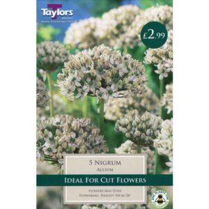 Allium Nigrum 5 Bulbs