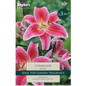 Lily Stargazer 2 Bulbs