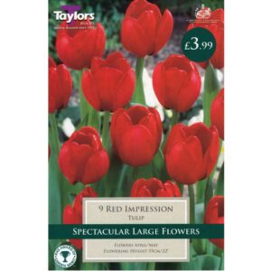 9 Tulip Red Impression