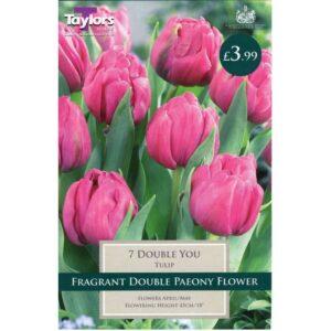 Tulip Double You 7 Bulbs