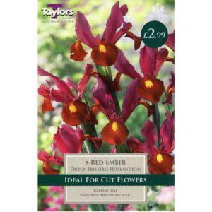 Iris Red Ember 8 Bulbs