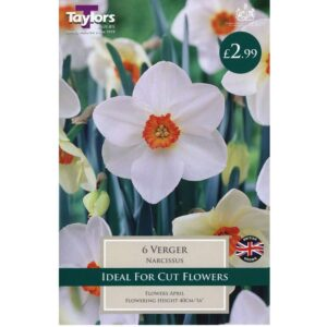 Narcissus Verger 6 Bulbs