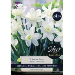 Narcissus Snow Baby 7 Bulbs