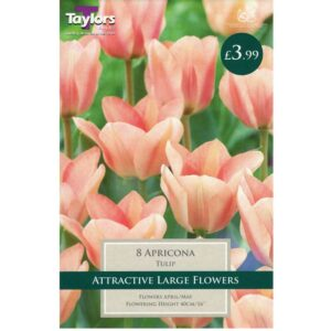 Tulip Apricona 8 Bulbs