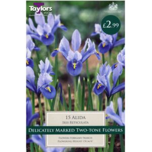 Iris Reticulata Alida 15 Bulbs